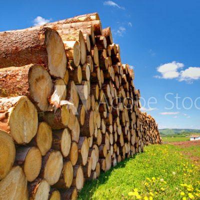 Équipements forestier